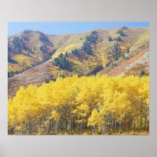 Les Etats-Unis, Utah, réserve forestière de Wasatc Posters
