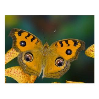 Les Etats-Unis, WA, Sammamish, Butterfy tropical Cartes Postales
