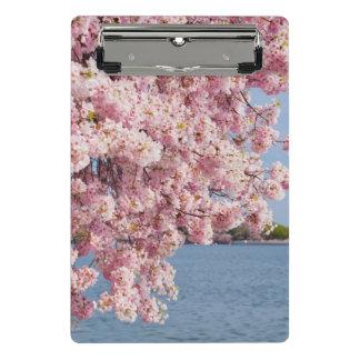 Les Etats-Unis, Washington DC, cerisier