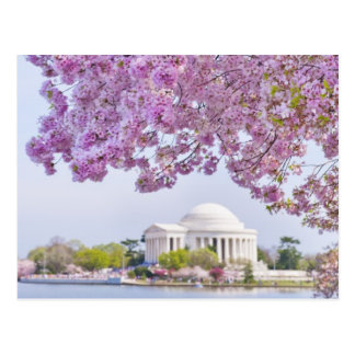 Les Etats-Unis, Washington DC, cerisier en fleur Carte Postale