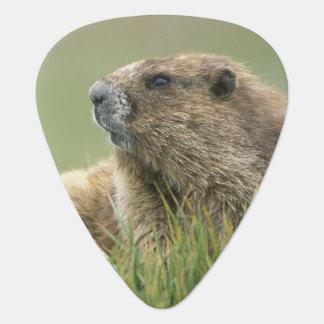 Les Etats-Unis, Washington, NP olympique, Marmot Médiators