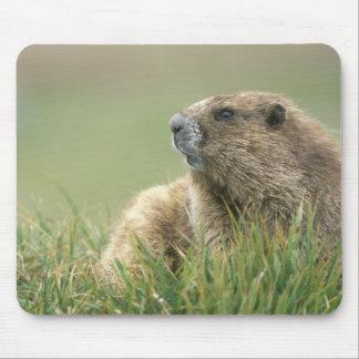 Les Etats-Unis, Washington, NP olympique, Marmot o Tapis De Souris