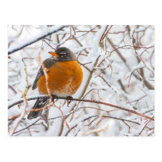 Les Etats-Unis, Wyoming, Américain Robin roosting Cartes Postales