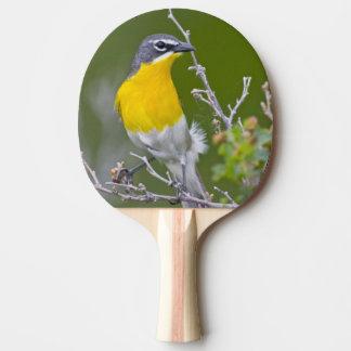 Les Etats-Unis, Wyoming, Icteria Jaune-breasted 2 Raquette De Ping Pong
