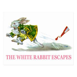 Les évasions blanches de lapin cartes postales