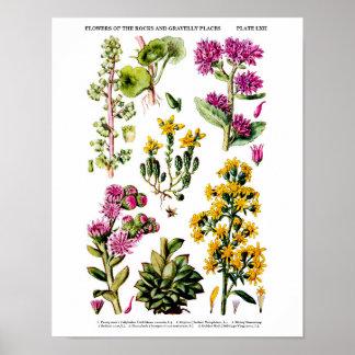 Les fleurs sauvages anglaises impriment le décor posters
