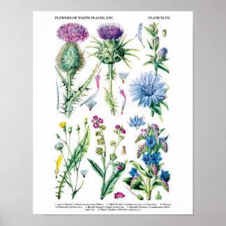 Les fleurs sauvages de chardon de lait impriment affiche