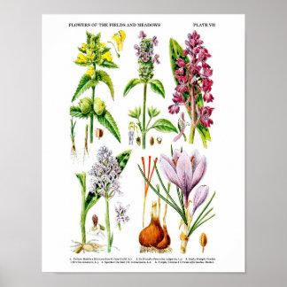 Les fleurs sauvages de pays britannique impriment affiche