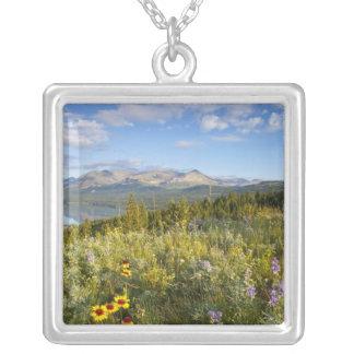 Les fleurs sauvages de prairie et abaissent le lac collier