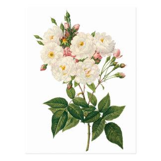 Les fleurs vintages florales rougissent Noisette R