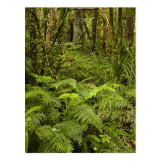 Les fougères et le buisson indigène près de Matai Carte Postale