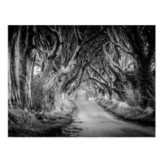 Les haies d'obscurité dans Black&White Carte Postale