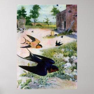 Les hirondelles de grange volent autour de vieille poster