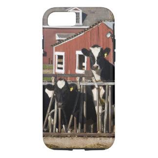 Les Holsteins à la ferme marécageuse de pré dans Coque iPhone 7
