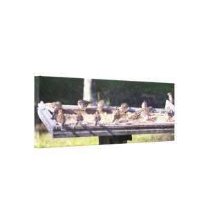 Les oiseaux de moineau à un conducteur d'oiseau toiles