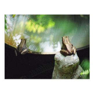Les paires en bronze de grenouille se reflètent carte postale