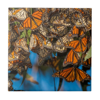 Les papillons de monarque de migration carreau