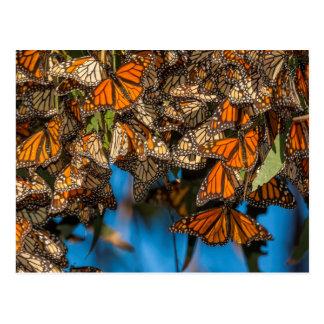 Les papillons de monarque de migration carte postale