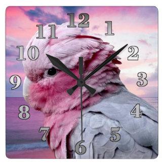 Les perroquets ajustent l'horloge murale