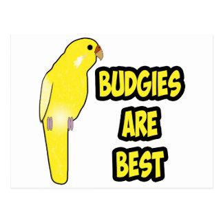 Les perruches sont les meilleures cartes postales