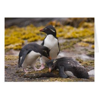 Les pingouins de Rockhopper communiquent les uns Carte De Vœux
