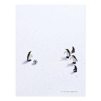 Les pingouins jouant au football carte postale