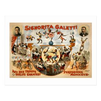 Les plus grands singes de exécution 1892 du monde carte postale