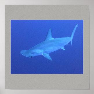 Les poissons de requin de poisson-marteau nagent posters