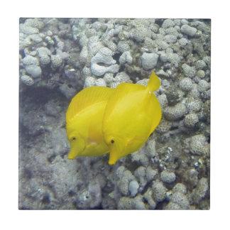 Les poissons jaunes de Tang Petit Carreau Carré