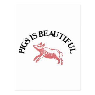 Les porcs est beau carte postale