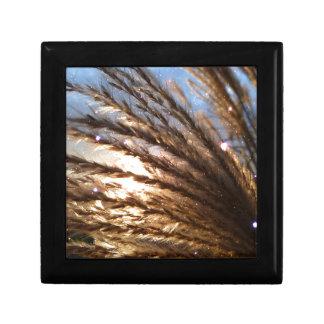Les rayons légers de blé d'or avec une nuit de petite boîte à bijoux carrée