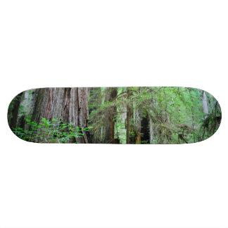 Les séquoias - séquoia planches à roulettes