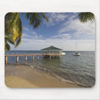 Les Seychelles, île de Praslin, Anse Bois de Rose, Tapis De Souris