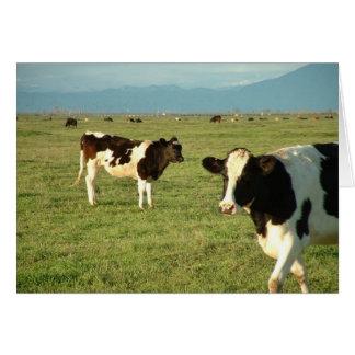les vaches ont obtenu le fromage cartes