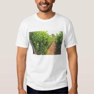 Les vignes se sont exercées haut sur des fils t-shirt