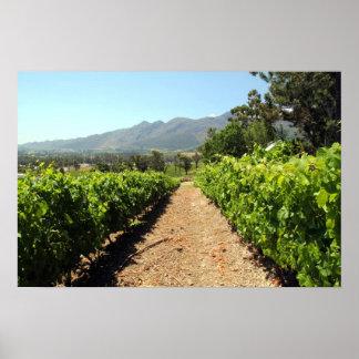 Les vignobles dans Franschhoek Afrique du Sud Posters