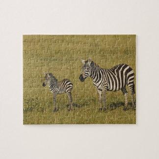 Les zèbres de Burchell de mère et de bébé, Equus Puzzle