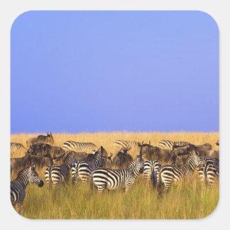 Les zèbres et le gnou de Burchell dans grand Sticker Carré