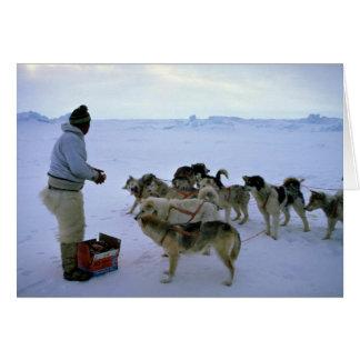 L'Esquimau polaire alimente des chiens Carte De Vœux