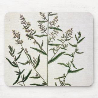"""L'estragon, plaquent 116 """"d'un de fines herbes cur tapis de souris"""