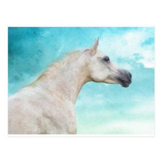 L'étalon blanc cartes postales