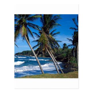 L'été tropical d'île ondule le St Lucia Carte Postale