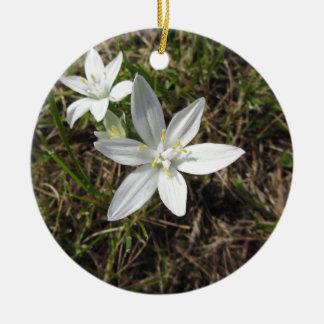 L'étoile de Bethlehem fleurit l'umbellatum Ornement Rond En Céramique