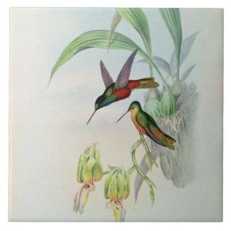 L'étoile de Bonaparte a affronté le colibri (color Grand Carreau Carré
