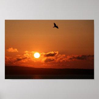 Lever de soleil au-dessus du lézard, les poster