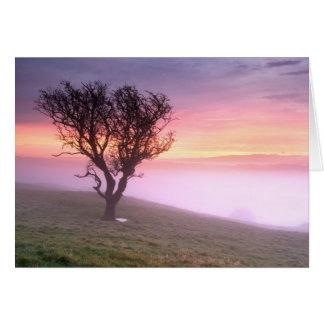 Lever de soleil brumeux et arbre solitaire - carte