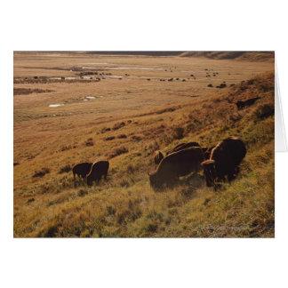 Lever de soleil sur le bison carte de vœux