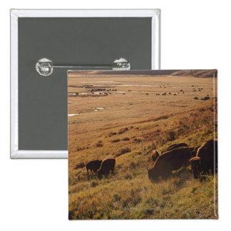 Lever de soleil sur le bison pin's