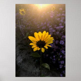 Lever de soleil, tournesol, et asters poster