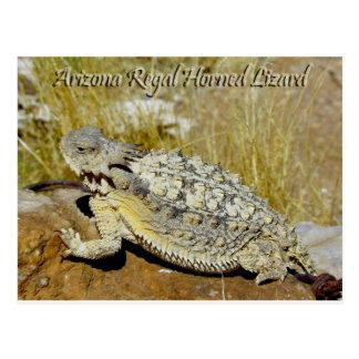 Lézard à cornes majestueux de l'Arizona Carte Postale